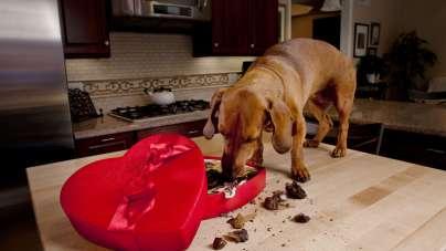 Šunų lepinimas